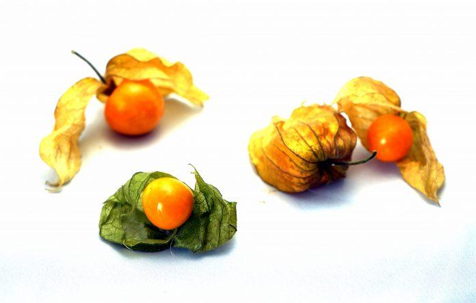 Physalis - www.chefsstuff.de